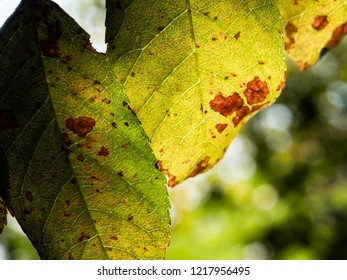 Colorful leaves in autumn colors