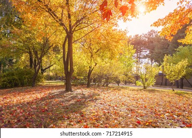 Colorful leaves in the autumn in the park