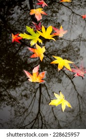 A lot of colorful Leaves in the autumn in the water