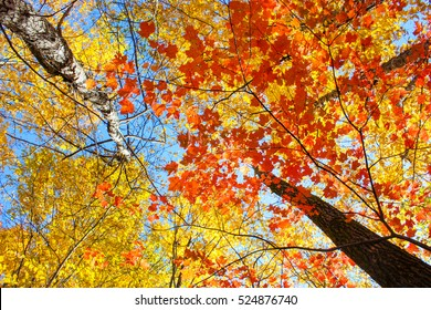 colorful leaves in fall season