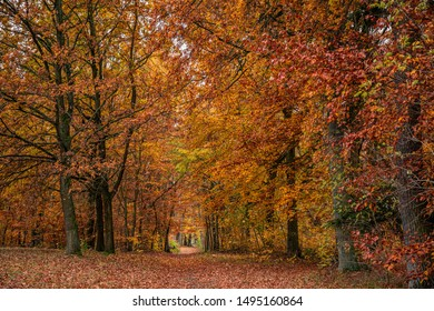 Colorful leaves in the forest in autumn