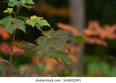 Colorful leaves in the forest. The Background Out Of Focus