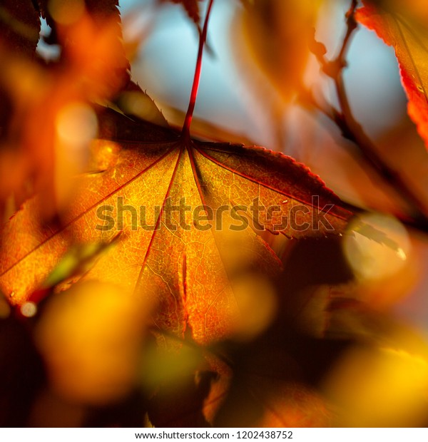 Colorful leaves in a nice bokeh color red