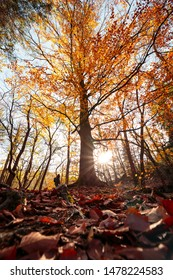 Colorful Leaves on the ground. Big tree in autumn with sun. Portrait