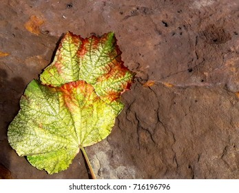 colorful leaves on the stone in bright sunshine