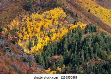 Colorful leaves on trees in Fall landscape