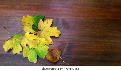 Colorful leaves on a wooden Board. Autumn background