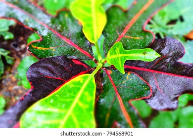 Colorful leaves plant Close up
