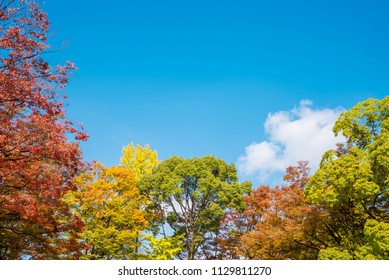 Colorful leaves tree in autumn season over blue sky