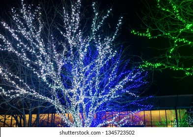 colorful lights illuminate trees during holidays and hall in background
