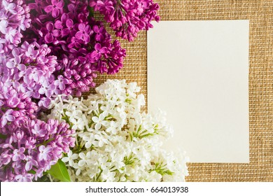 Colorful lilac flowers with blank greeting card.
