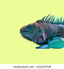 Colorful Lizard on color background.