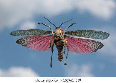colorful locust flying background blue sky with clouds
