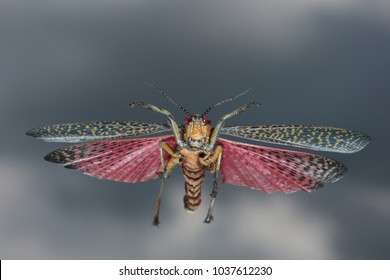 colorful locust flying dramatic sky with dark clouds