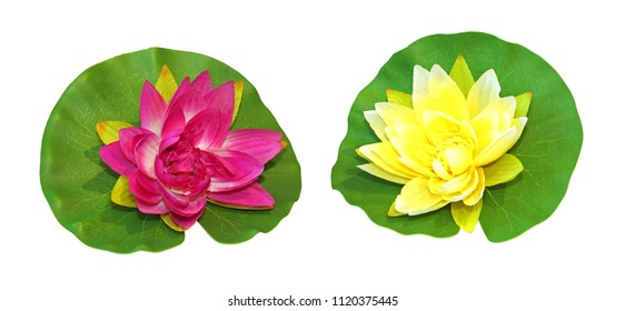 Colorful lotus flower decor isolated with clipping path included