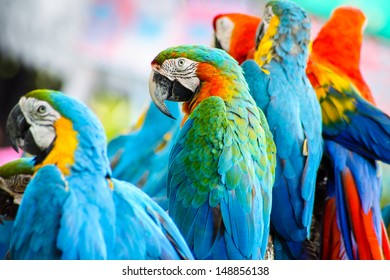 Colorful macaw background