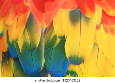 Colorful macaw feathers.