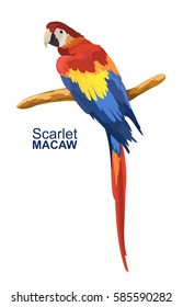 Colorful macaw parrot. Beautiful Ara parrot on branch.