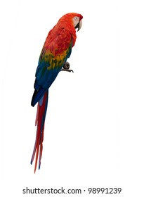 Colorful macaw parrot isolated on white