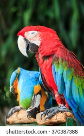 Colorful  macaw sitting on branch