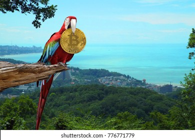Colorful macaw sitting on broken tree with a Golden bitcoin coin in its beak on the background of mountains and ocean. Vacation for bitcoin. Freelance for bitcoin.