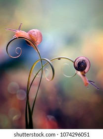 colorful macro photography