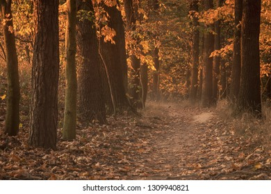 Colorful, magical and mysterious autumn in forest. Amazing colors of leaves both on trees and fallen down. Beautiful foliage, peaceful, relaxing, quiet. Very popular season for trips and hiking.