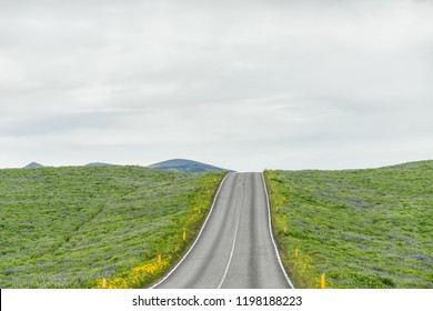 Colorful many blue and purple lupine, lupin flowers, green grass in Iceland meadow, ring road highway steep hill incline up