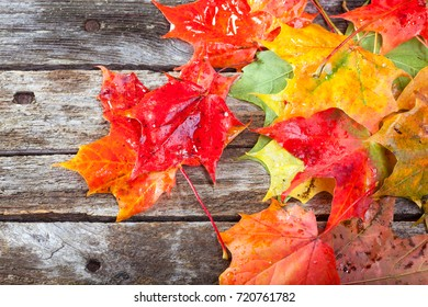 Colorful maple foliage on the vintage wooden table
