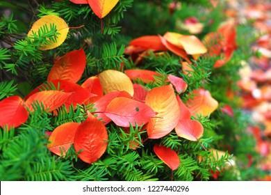 Colorful maple leaves. Atumn concept background.