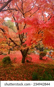 colorful maple leaves and branches from kyoto, japan