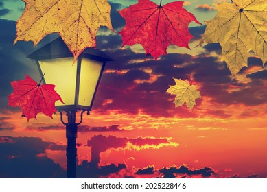 Colorful maple leaves fall against vintage street lamp lighting and magic sunset sky. Gold Autumn season