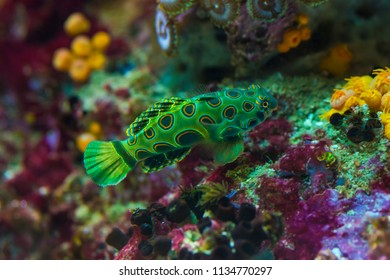 Colorful marine salt water fish in aquarium
