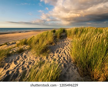 Colorful marram grass covered dunes in northern France