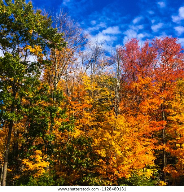 Colorful Massachusetts Fall Foliage Nature Stock Image