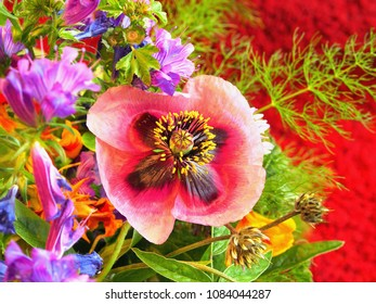 a colorful meadow bouquet in closeup. Close-up view of an open lilac-red poppy flower, in the background other colorful meadow flowers. recorded on red underground