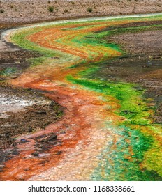 Colorful microbial ribbons of green, orange, yellow, and red run through a runoff stream from a hot spring in Norris Geyser Basin of Yellowstone National Park, Wyoming, USA.