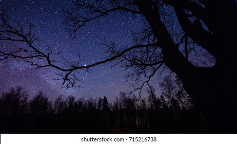 colorful milky way galaxy seen in night sky through black trees in forest