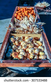 Colorful miniature orange and white pumpkins for sale at a Halloween pumpkin patch.