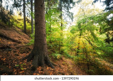 Colorful mixed forest in the German forest