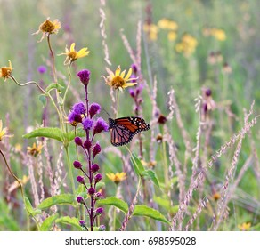 Colorful monarch butterfly on a purple flower