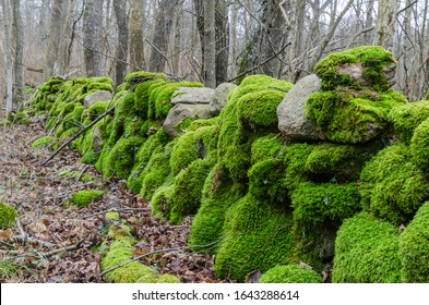 Colorful moss covered old dry stone wall in a deciduous forest in early spring season