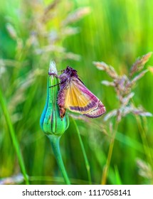 colorful moth on the meadow