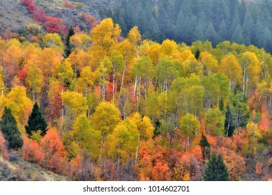 Colorful mountain fall colors with the leaves in the trees changing colors