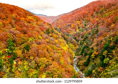 Colorful mountains range in autumn  at the Shirakami area with red, orange, and golden foliage ,small river across between mountains in Aomori Tohoku Japan, the Jogakura located near Jogakura bridge.