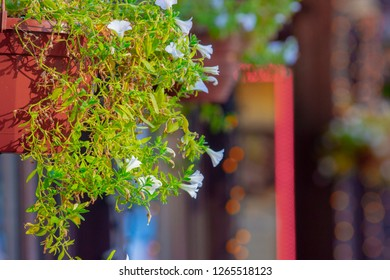 Colorful multiflora petunias in an wooden planter window box.