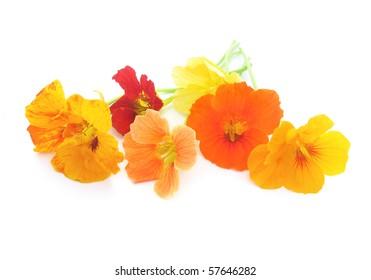 colorful nasturtium flowers on white background