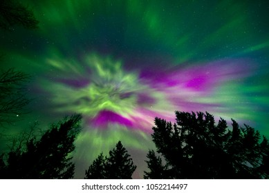 Colorful northern lights and trees