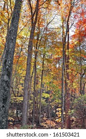 A colorful November for fall foilage, not usually seen so vibrant at Kings Mountain State Park in South Carolina.