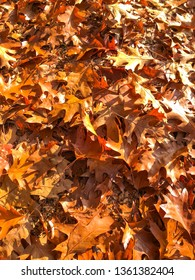 Colorful oak leaves in fall colors on the ground.